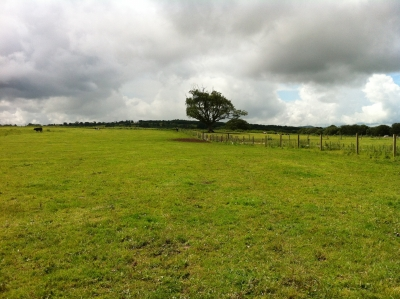 Land for sale at Peterswell,Loughrea,Co Galway